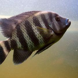 by José António Duarte Moura - Animals Fish
