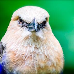 Im Watching You by Ken Nicol - Animals Birds