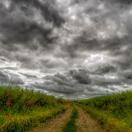road to storm by Lupu Radu - Landscapes Cloud Formations ( field, clouds, sky, dobrogea, green, grey, poppies, storm, country road )