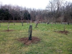 Photo 8 / 8 - Watts Gallery, Orchard Post-Planting
