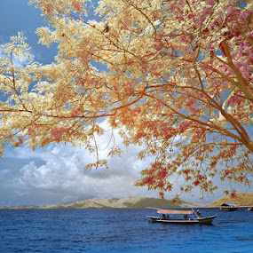 Perfect Holiday by Hirza Kini - Landscapes Beaches ( ir, waterscape, beach )