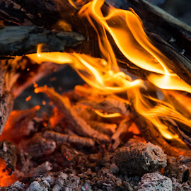 Flames by Peter Hutchison - Abstract Fire & Fireworks ( flames, ash, wood, campfire, fire )