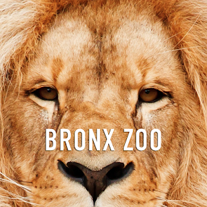 Bronx Zoo App For PC / Windows 7/8/10 / Mac – Free Download