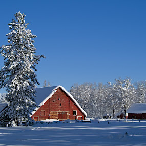 Red Barn by Logan Knowles - Buildings & Architecture Other Exteriors ( red, winter, barn, snow, landscape )