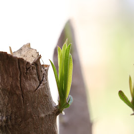 Up Close Photo Series 4 by Sunil Abraham - Nature Up Close Trees & Bushes ( fresh, green, bark, leaves, close up, photography )