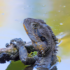by Steve Hunt - Animals Reptiles