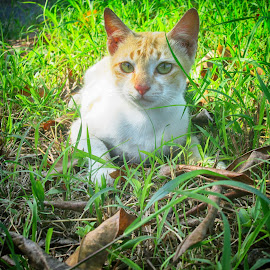 Perfect of You by Hirra Eka - Animals - Cats Portraits ( cats, indonesia, cute )