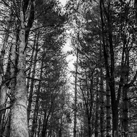 Infinity   by Diane Ebert - Landscapes Forests ( #candidsaremypassion, #thecandidshutterbug, #bwphotography )