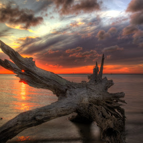 Driftwood Eye of Fire by Greg Mimbs - Landscapes Cloud Formations ( clouds, water, sand, erosion, texture, waves, driftwood beach, georgia, ocean, live oaks, barrier island, sky, tree, sunset, jekyll island,  )