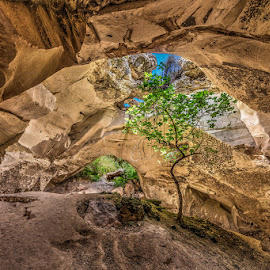 Lonely tree in a cave by Sergio Gold - Landscapes Caves & Formations