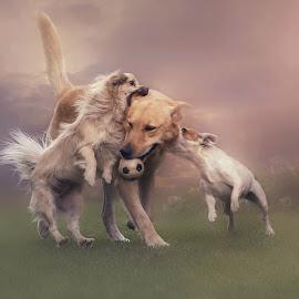 by Sam Van Vuuren - Animals - Dogs Playing