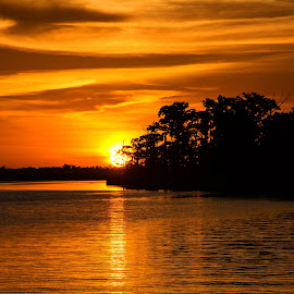 Gold by Wendy  Walters - Landscapes Waterscapes ( east pearl river, gulf coast, louisiana, pearlington, mississippi )