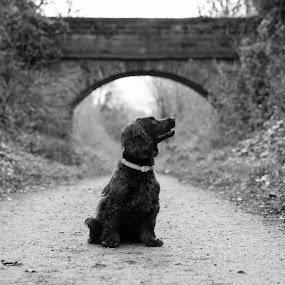 Under The Bridge by Bearded Egg - Animals - Dogs Portraits ( black and white, bridge, dog, portrait, animal,  )