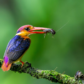Bunch  by Surajit Dutta - Animals Birds ( bird, nature, action, nature up close, bird photography )