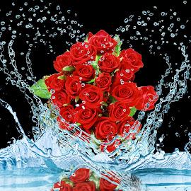 rose by Miroslav Potic - Digital Art Things ( rose )