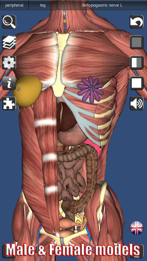 3D Anatomy Screenshot 4