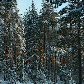 Winter by Alf Winnaess - Uncategorized All Uncategorized