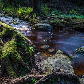 Flowing in the green by Juha Kauppila - Landscapes Waterscapes ( green, long exposure, forest, river, tussinkoski )