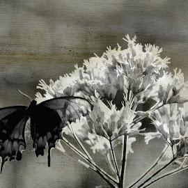 by Kathy Filipovich - Digital Art Things