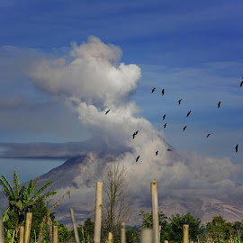 Hovering Above the Eruption by Kriswanto Ginting's - Landscapes Mountains & Hills ( volcano, kriswanto ginting, nikon d7100, nikon, birds, flock, sinabung )