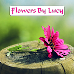 Flowers By Lucy APK Image
