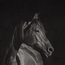 Dark Horse by Stacey Bates - Black & White Animals ( black and white, texture, horse, dark, arabian,  )