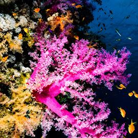 sharm_uw2 by Emanuele Pola - Animals Sea Creatures ( nauticam, underwater, sharm el sheikh, diving, olympus )