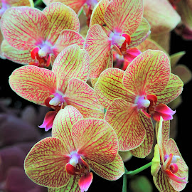 Orchids #3 by Koh Chip Whye - Flowers Flower Gardens