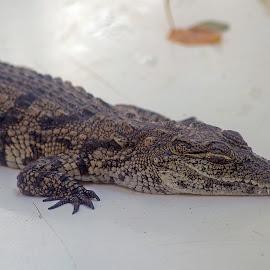 by Kishu Sing - Animals Reptiles