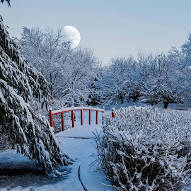 Japanese Garden. by Jim Dawson - Novices Only Landscapes ( moon. snow. march. japanese garden. fresh. cold. bridge. alone. )