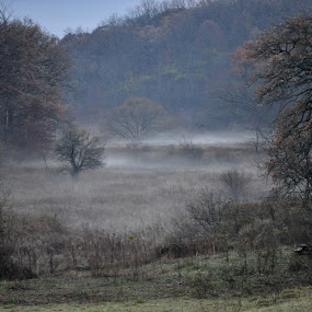 Misty Meadow by Kristina Weber - Landscapes Prairies, Meadows & Fields ( wisconsin, fog, dew, fall, meadow, evening, mist )