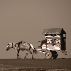 Time to travel...  by Saumy Nagayach - Novices Only Objects & Still Life ( vehicle, dust, horse, india, cart, pune )
