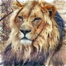 Lion by Gareth Parkes - Digital Art Animals ( lion, cat, leo, wildlife )