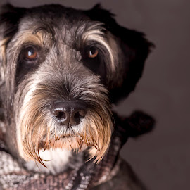 Elly by Susan Pretorius - Animals - Dogs Portraits