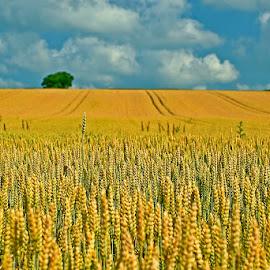 by Siniša Almaši - Nature Up Close Other plants ( sky, view, nature, plants, tree, clouds, light., landscape, colours )