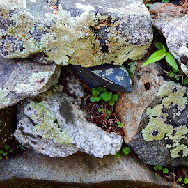 Lichen by Sarah Brown - Nature Up Close Rock & Stone ( #stonewall, #lichenandmoss, #landscaping, #naturefindsaway )