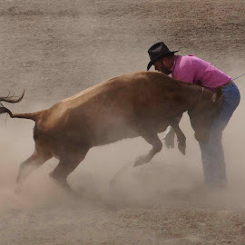 Ouch by Gaylord Mink - Sports & Fitness Rodeo/Bull Riding ( cow, rodeo, man, dust )