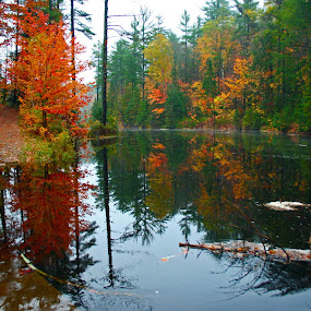 Fall leaves near calm water. by Philip O'Brien - Landscapes Waterscapes ( water, autumn, color, fall, pwcautumn, forest, leaves,  )