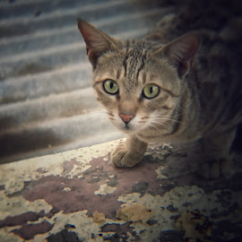 Kitten by Kunal Rathod - Animals - Cats Kittens ( cat, blur, iphone, kitty )