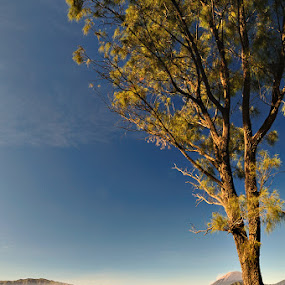Other Side of Bromo by Hirza Kini - Landscapes Mountains & Hills ( #landscape #indonesia )