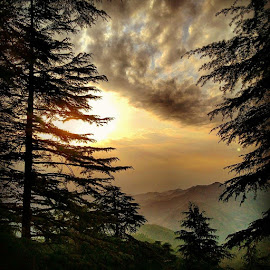 Sunset, Chail by Ranjeet Adkar - Novices Only Landscapes ( nature, tree, sunset, trees, india, chail, himachal )