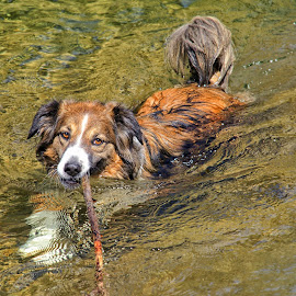 Playin' Water Fetch by Twin Wranglers Baker - Animals - Dogs Playing
