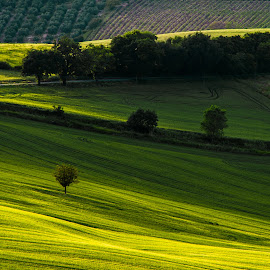 Hills by Emanuele Zallocco - Landscapes Prairies, Meadows & Fields