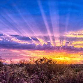 Tucson Tonight by Charlie Alolkoy - Landscapes Sunsets & Sunrises ( desert, sunset, arizona, tucson, sunrise )