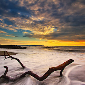 Lonely Log by Satrya Prabawa - Landscapes Waterscapes