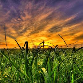 by Derrill Grabenstein - Landscapes Prairies, Meadows & Fields
