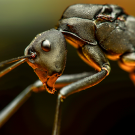Scavenging by Dave Lerio - Animals Insects & Spiders