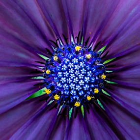 by Dave Martin - Flowers Single Flower (  )