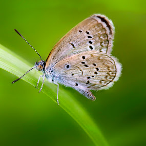 Butterfly by Mohamad Sa'at Haji Mokim - Animals Insects & Spiders