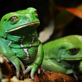 Sad Moment by Steve Wilking - Animals Amphibians (  )